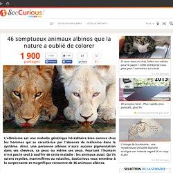46 somptueux animaux albinos que la nature a oublié de colorer