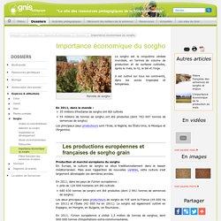 GNIS 26/09/13 Importance économique du sorgho