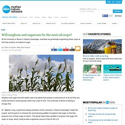 MNN 27/04/12 Will sorghum and sugarcane be the next oil crops?