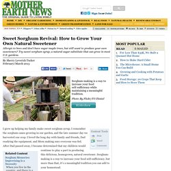 Sweet Sorghum Revival: How to Grow Your Own Natural Sweetener - Modern Homesteading