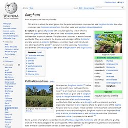 Sorghum - Wikipedia, the free encyclopedia - (Build 201004010646