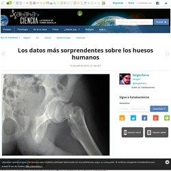 Los datos más sorprendentes sobre los huesos humanos