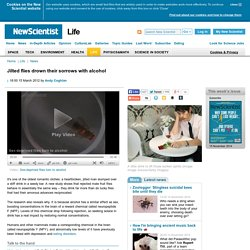 Jilted flies drown their sorrows with alcohol - life - 15 March 2012