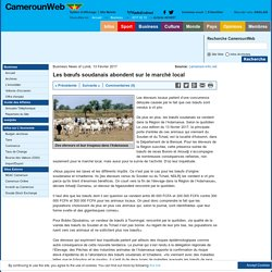 Les bœufs soudanais abondent sur le marché local