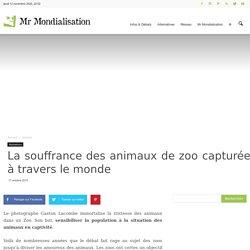 La souffrance des animaux de zoo capturée à travers le monde