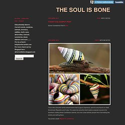 The soul is bone