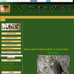 Soulevez juste une pierre au jardin…et vous les verrez - Le JardinOscope, toute la vie animale de nos parcs et jardins