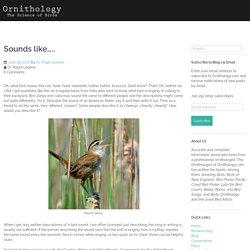 Sounds like….. – Ornithology