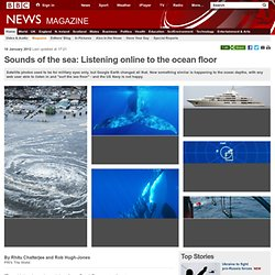 Sounds of the sea: Listening online to the ocean floor