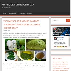 The Leaves of Soursop Are 1000 Times Stronger at Killing Cancer Cells Than Chemotherapy – My advice for healthy day