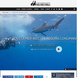 Sous la mer avec les requins longimanes