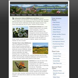 Southeastern Arizona Wildflowers and the Plants of the Sonoran Desert
