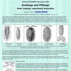 Sowbugs and Pillbugs