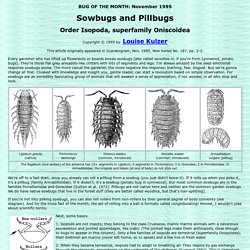 Sowbugs and Pillbugs