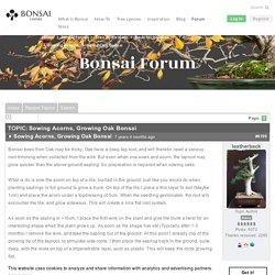 Sowing Acorns, Growing Oak Bonsai - Bonsai forum - Bonsai Empire
