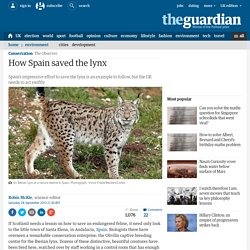How Spain saved the lynx