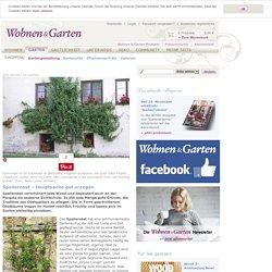 Spalierobst – Hauptsache gut erzogen - Wohnen & Garten