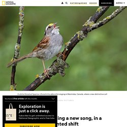These sparrows are singing a new song, in a rapid, unprecedented shift