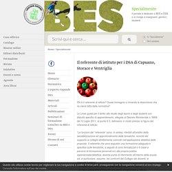 Specialmente: Il referente di istituto per i DSA di Capuano, Storace e Ventriglia - Loescher Editore