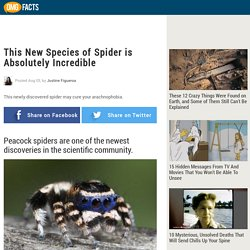 This New Species of Spider is Absolutely Incredible