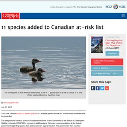 11 species added to Canadian at-risk list