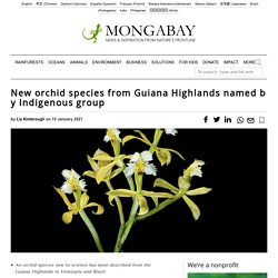 New orchid species from Guiana Highlands named by Indigenous group