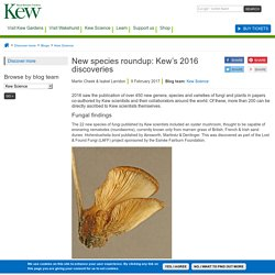 New species roundup: Kew's 2016 discoveries