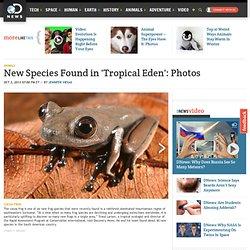 New Species Found in 'Tropical Eden': Photos
