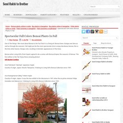 Spectacular Fall Colors Bonsai Plants In Fall ~ Send Rakhi to Brother