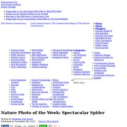 Spectacular Spider