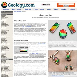 Ammolite: The Gemstone with Spectacular Color Properties