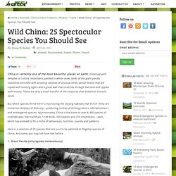 Wild China: 25 Spectacular Species You Should See