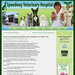 Don't Let Monsoon Months put a Damper on Pets' Fun – Speedway Veterinary Hospital