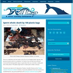 Sperm whale: death by 100 plastic bags