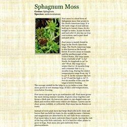 Sphagnum Moss - Sphagnum andersonianum