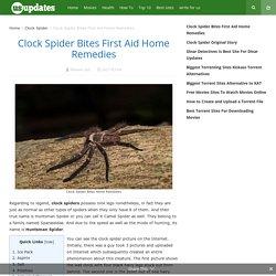 Clock Spider Bites First Aid Home Remedies - Huntsmanspider