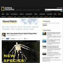 Q&A: New Spider Weaves Spider-Shaped Web