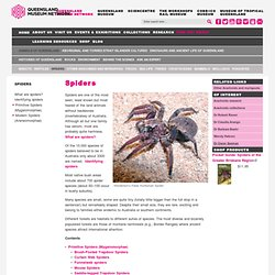 Queensland Museum - Spiders