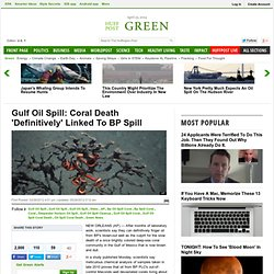 Gulf Oil Spill: Coral Death 'Definitively' Linked To BP Spill
