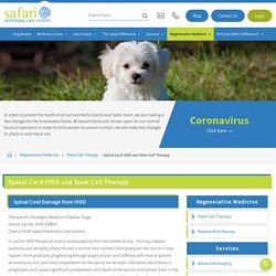 Spinal Cord IVDD Therapy Hospital for Canine in League City – Stem Cell Safari