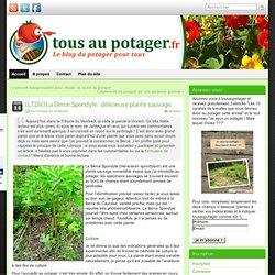 [LTDV] La Berce Spondyle : délicieuse plante sauvage