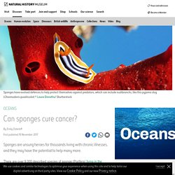 Can sponges cure cancer?