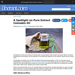 A Spotlight on Pure Extract Cannabis Oil