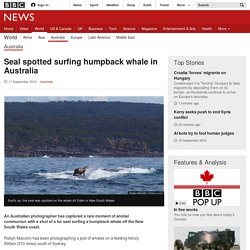 Seal spotted surfing humpback whale in Australia - BBC News