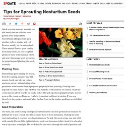 Tips for Sprouting Nasturtium Seeds