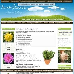 Aloé squarrosa (Aloe squarrosa) : arrosage, entretien