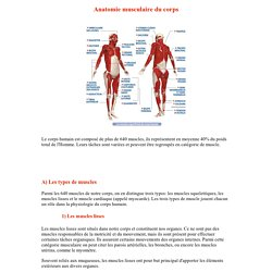 L'anatomie musculaire: du muscle squelettique, lisse et cardiaque aux myofibrilles