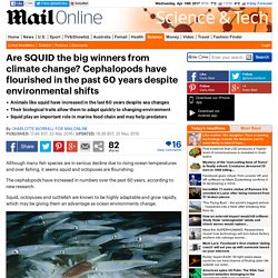 DAILYMAIL 23/05/16 Are SQUID the big winners from climate change? Cephalopods have flourished in the past 60 years despite environmental shifts