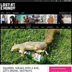 Squirrel sneaks into a bar, gets drunk, destroys everything