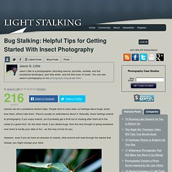 Bug Stalking: Helpful Tips for Getting Started With Insect Photography
